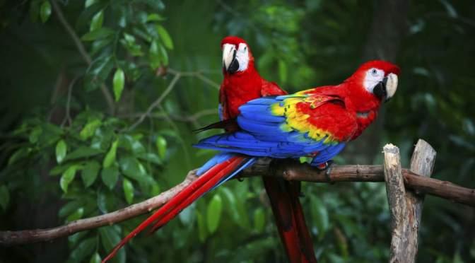 Fauna del Parque Tayrona